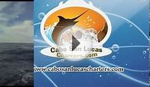 Cabo San Lucas Sportfishing Charters- 31ft. Rosa Del Mar