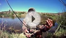Fly Fishing for Smallmouth Yellowfish and Smallmouth bass