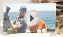 Guerita Sportfishing Cabo San Lucas Deep Sea Fishing Charters
