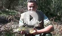 massive brown trout rapala small streams *fishing